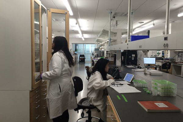 Students in the Swanson Energy Lab.